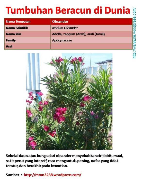 Oleander Tumbuhan Beracun Di Dunia Wannura