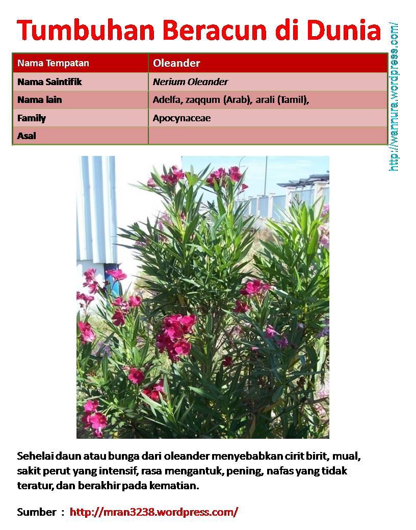 tumbuhan beracun