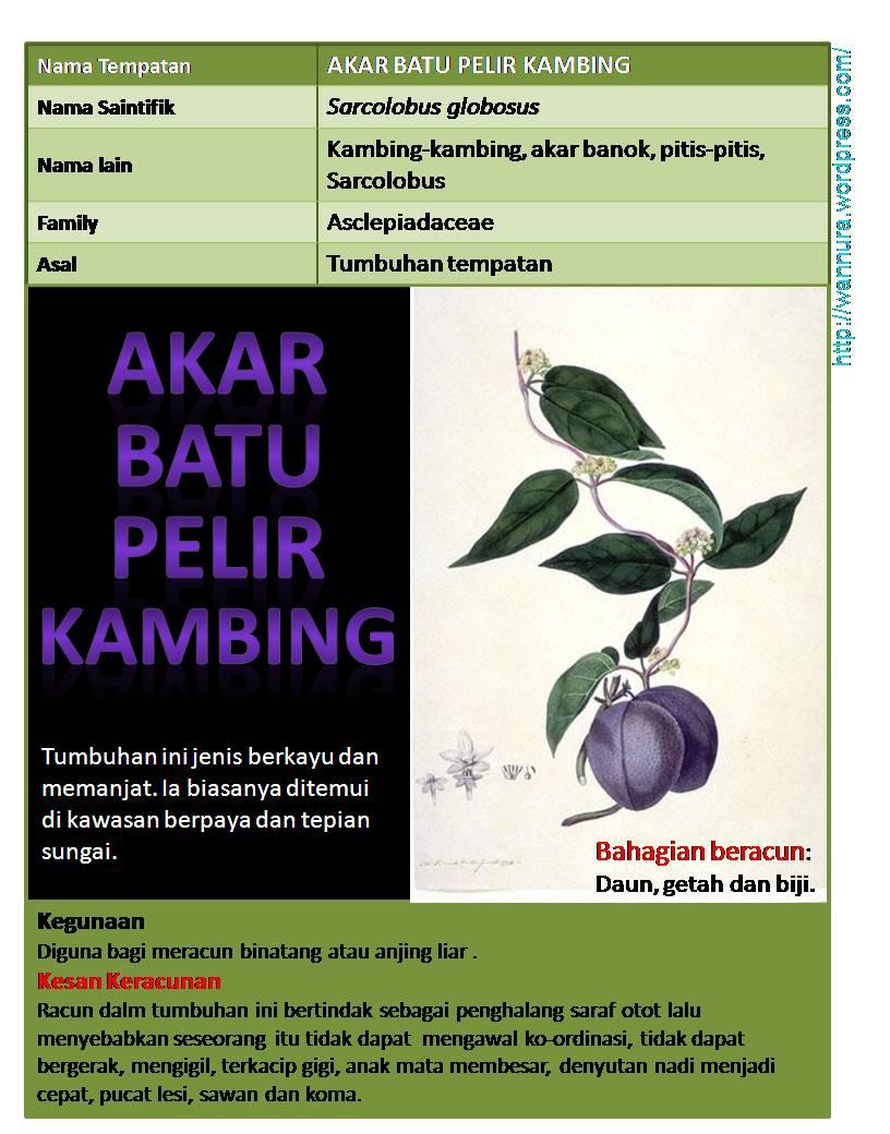 Jilat Cipap Sedap http://ajilbab.com/pelir-gambar-basah-cipap-ketat
