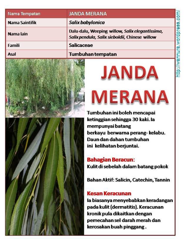 Janda Merana Wannura
