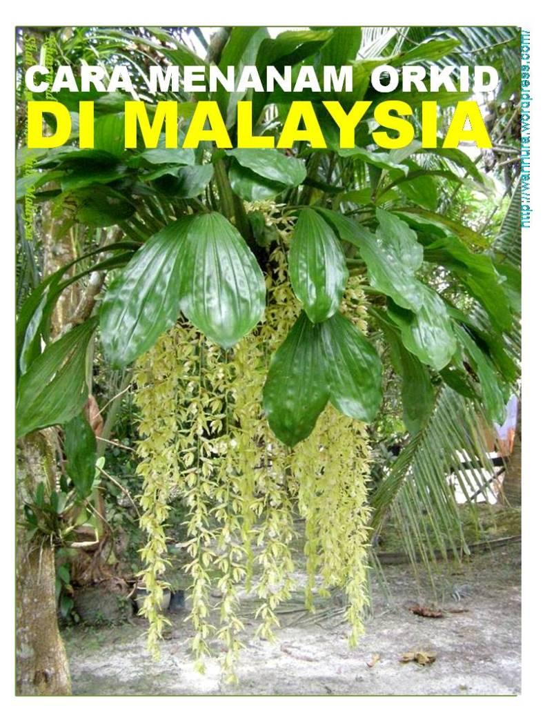 Cara menanam orkid di malaysia | wannura
